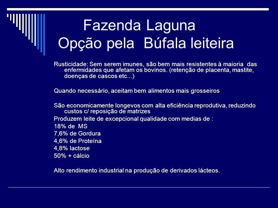 Fazenda Laguna Opção pela Búfala leiteira