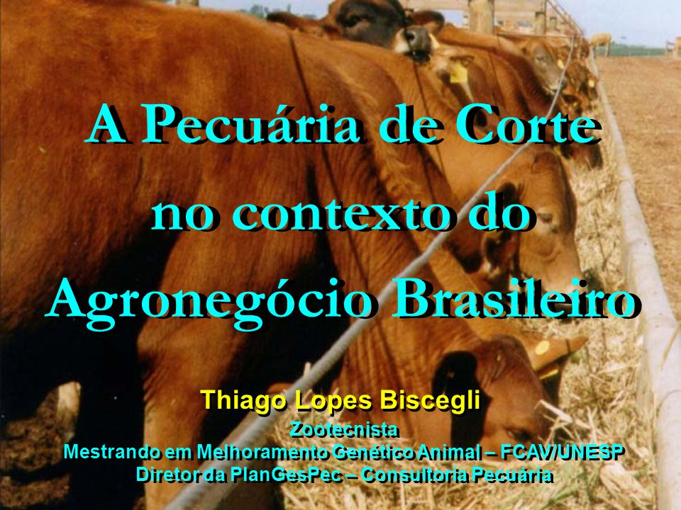 A Pecuária de Corte no contexto do Agronegócio Brasileiro