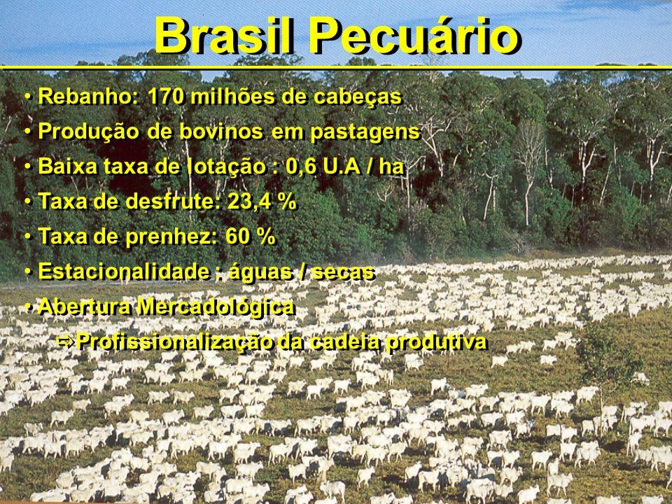 Brasil Pecuário Rebanho: 170 milhões de cabeças