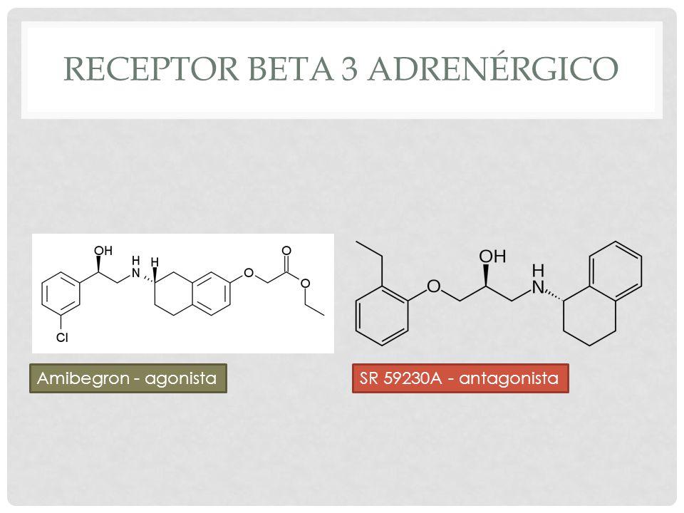 Receptor beta 3 adrenérgico