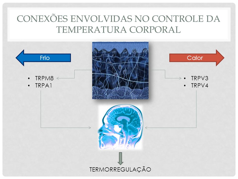 CONEXÕES ENVOLVIDAS NO CONTROLE DA TEMPERATURA CORPORAL