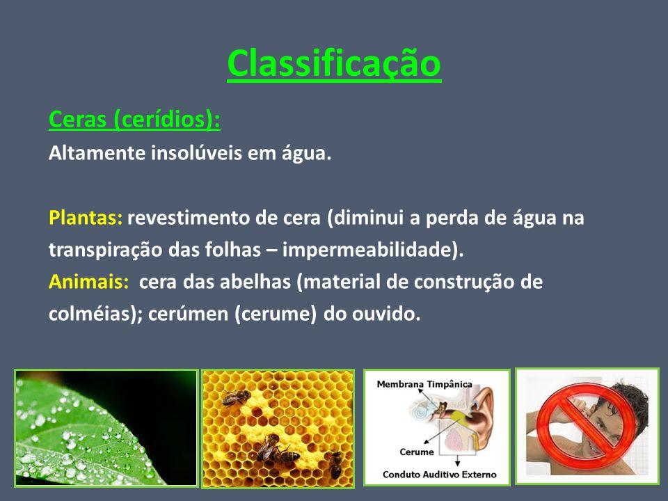 Classificação Ceras (cerídios): Altamente insolúveis em água.