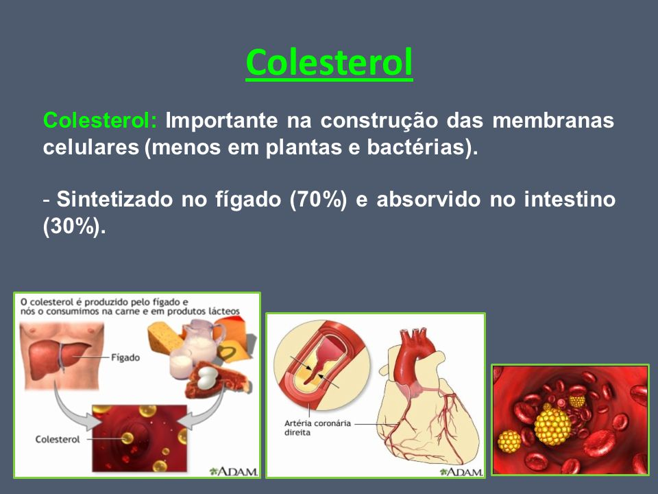 Colesterol Colesterol: Importante na construção das membranas celulares (menos em plantas e bactérias).