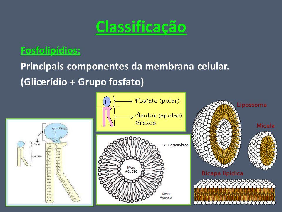 Classificação Fosfolipídios: Principais componentes da membrana celular.