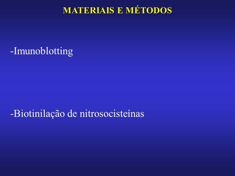 Biotinilação de nitrosocisteínas