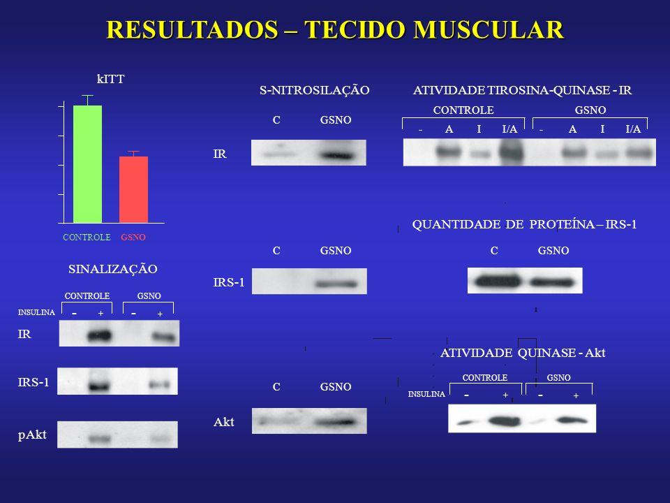 RESULTADOS – TECIDO MUSCULAR