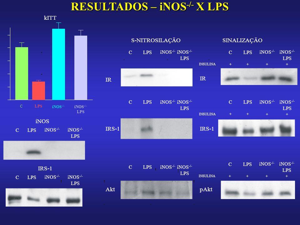 RESULTADOS – iNOS-/- X LPS