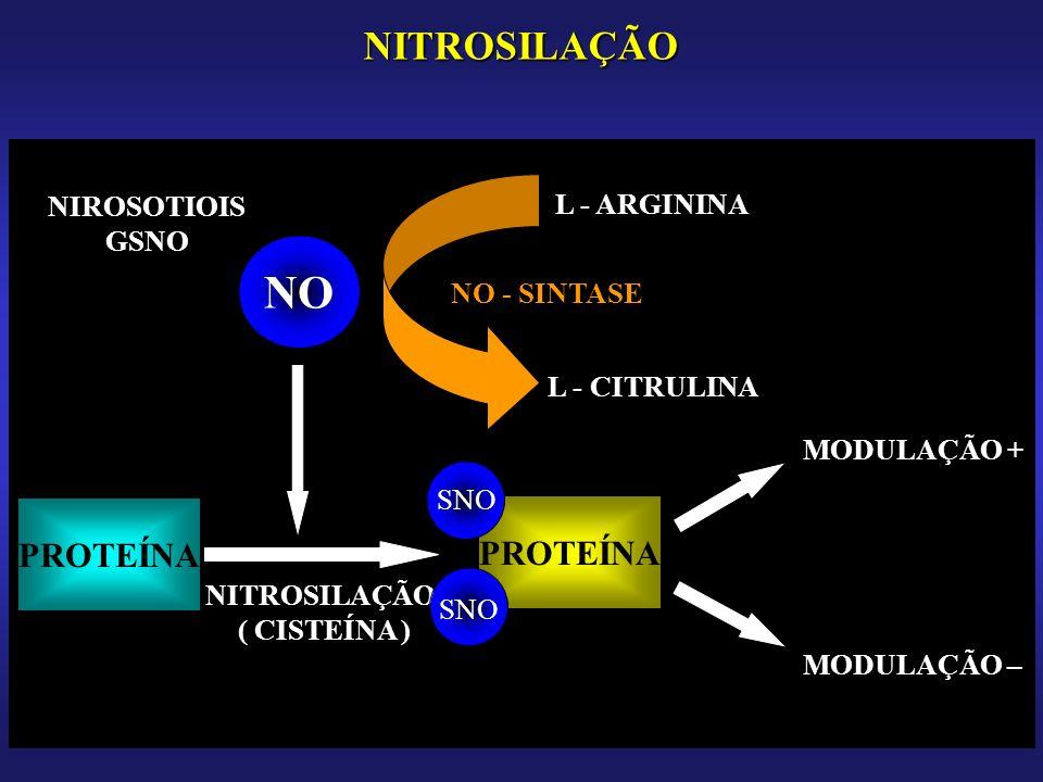 NO NITROSILAÇÃO PROTEÍNA PROTEÍNA NIROSOTIOIS GSNO L - ARGININA