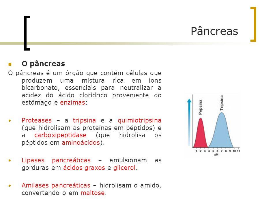 Pâncreas O pâncreas.