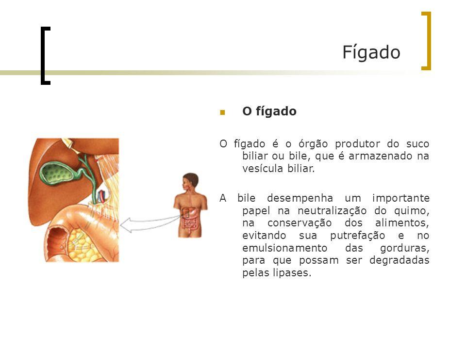 Fígado O fígado. O fígado é o órgão produtor do suco biliar ou bile, que é armazenado na vesícula biliar.