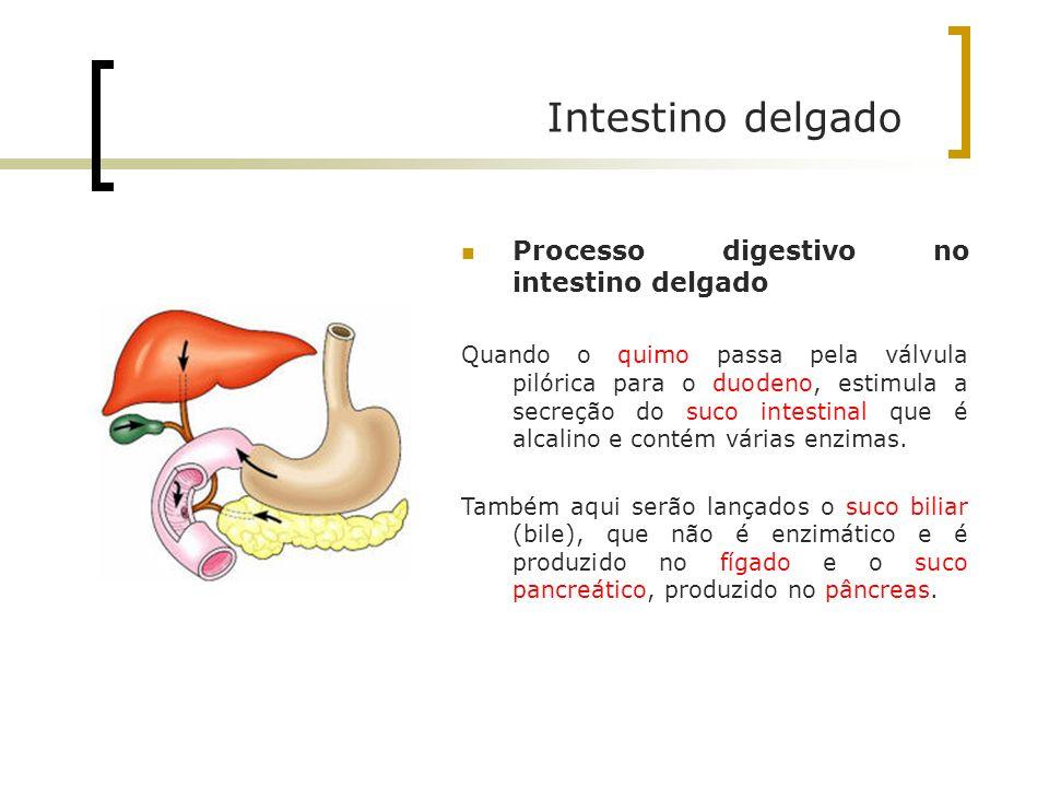 Intestino delgado Processo digestivo no intestino delgado