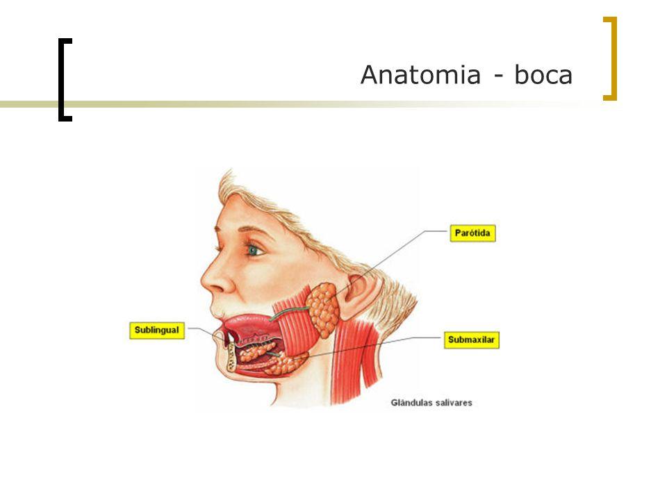 Anatomia - boca