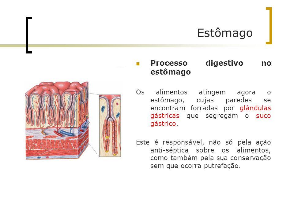 Estômago Processo digestivo no estômago