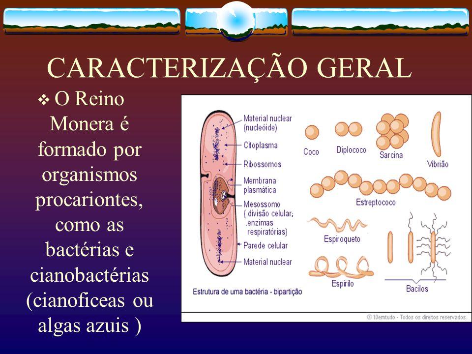 CARACTERIZAÇÃO GERALO Reino Monera é formado por organismos procariontes, como as bactérias e cianobactérias (cianoficeas ou algas azuis )