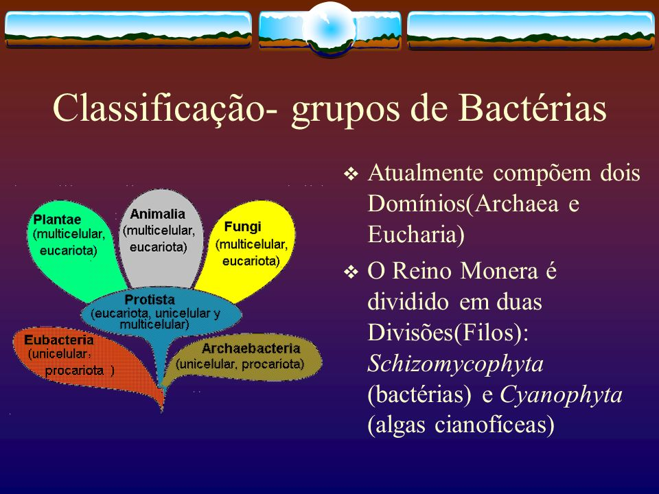 Classificação- grupos de Bactérias