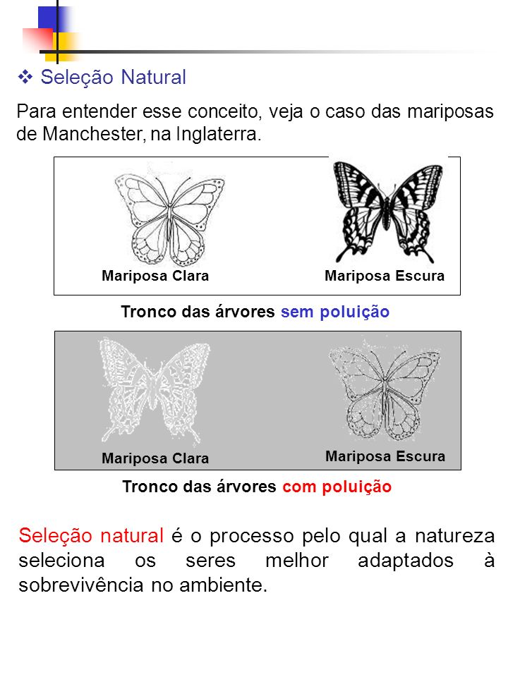 Seleção Natural Para entender esse conceito, veja o caso das mariposas de Manchester, na Inglaterra.