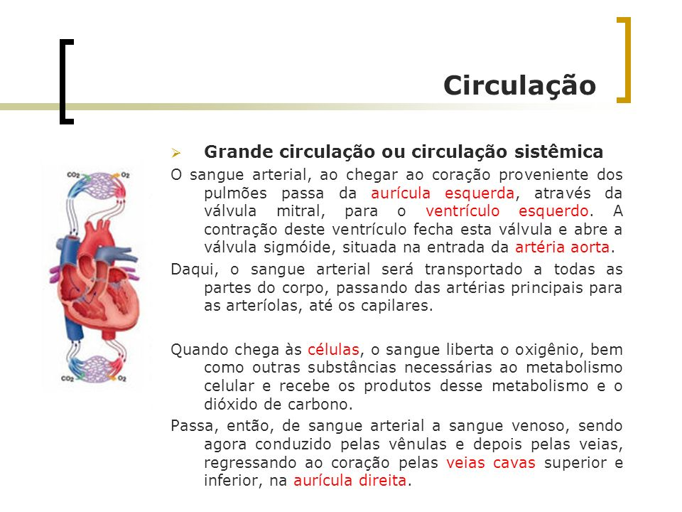 Circulação Grande circulação ou circulação sistêmica