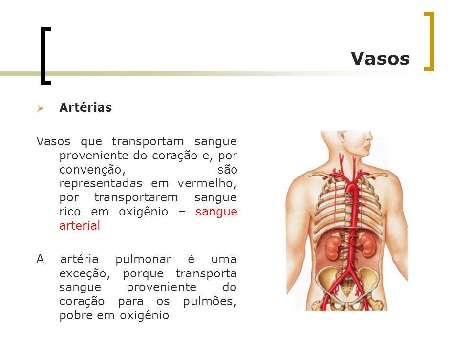 Vasos Artérias.