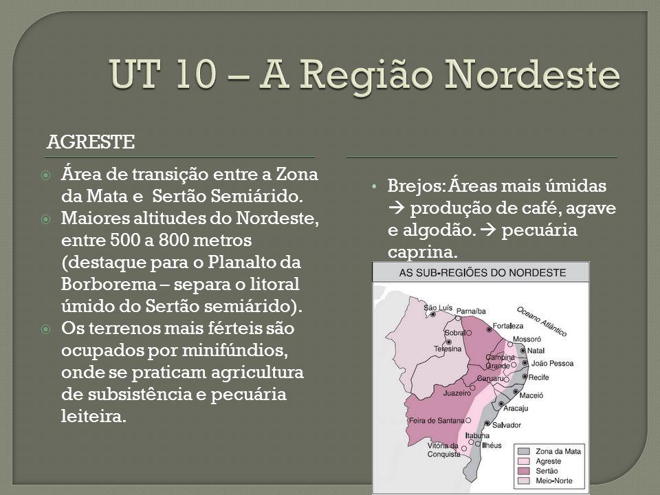 UT 10 – A Região Nordeste Agreste