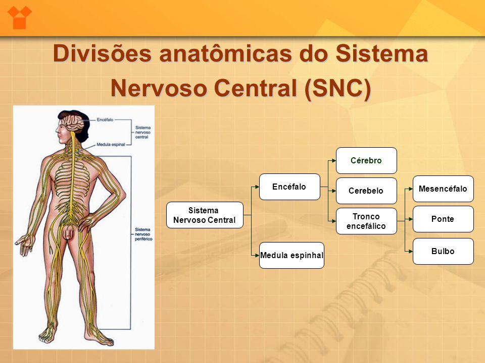 Divisões anatômicas do Sistema Nervoso Central (SNC)