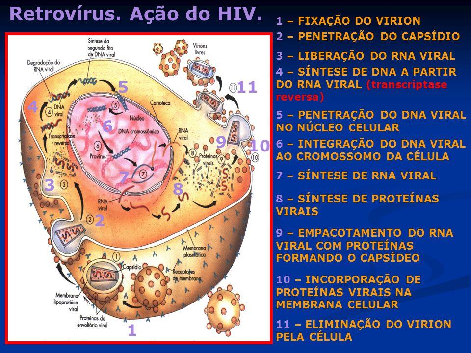 Retrovírus. Ação do HIV. 5 11 4 6 9 10 7 3 8 2 1 1 – FIXAÇÃO DO VIRION