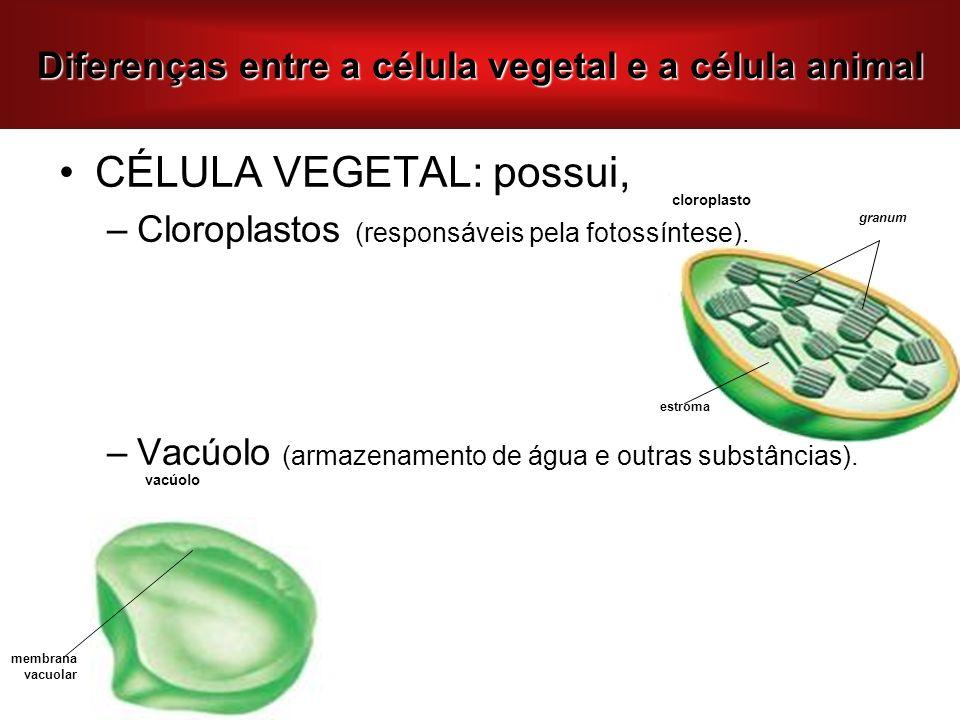 Diferenças entre a célula vegetal e a célula animal