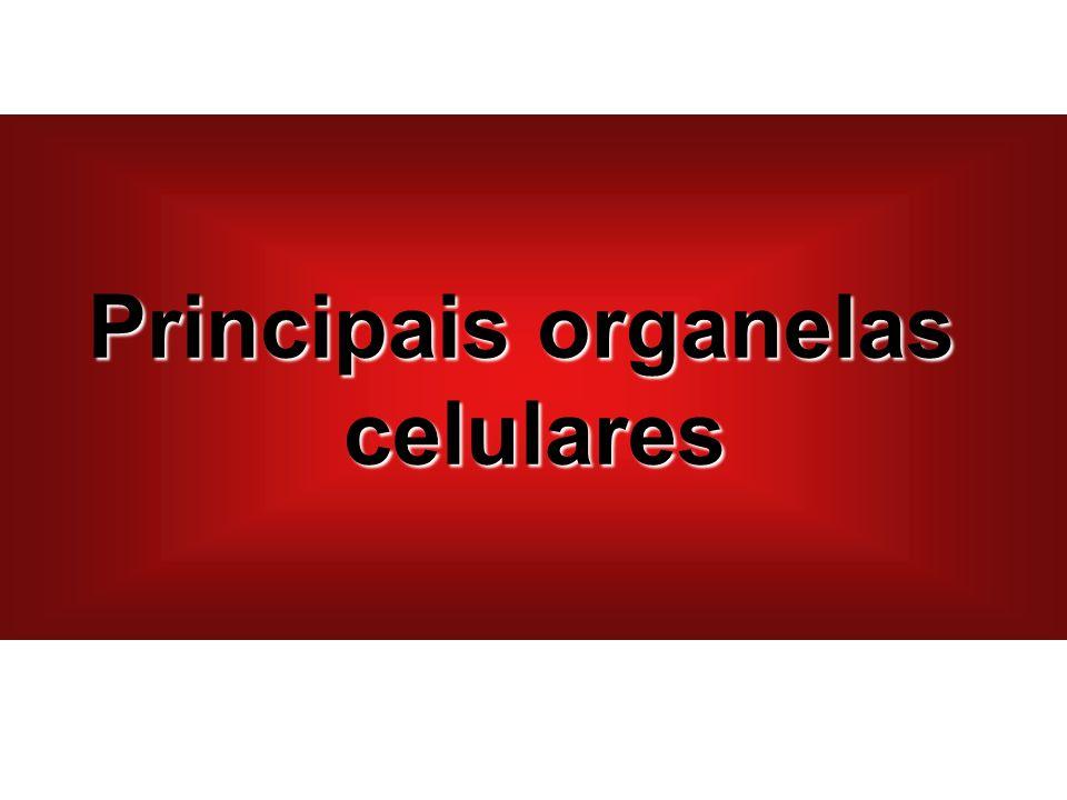 Principais organelas celulares