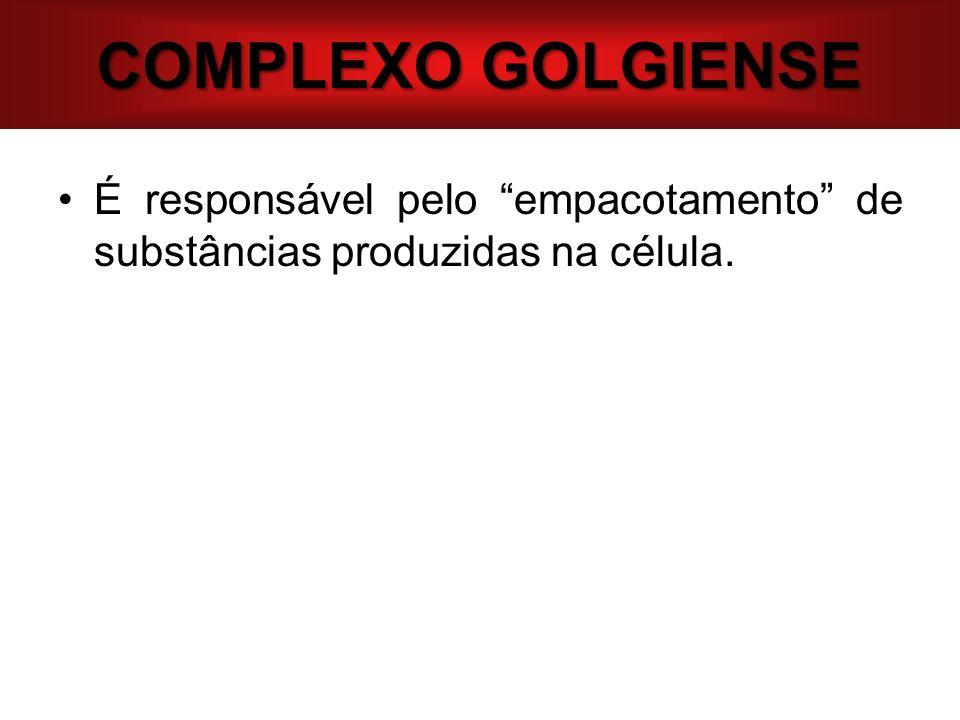 COMPLEXO GOLGIENSE É responsável pelo empacotamento de substâncias produzidas na célula.