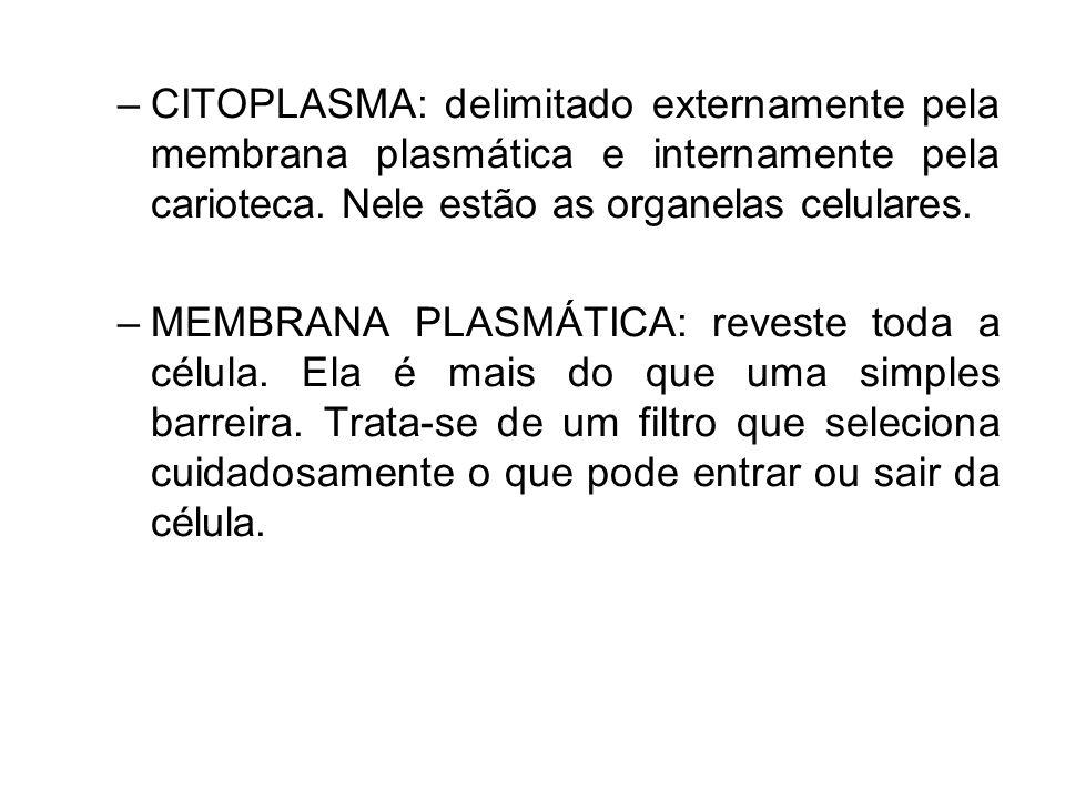 CITOPLASMA: delimitado externamente pela membrana plasmática e internamente pela carioteca. Nele estão as organelas celulares.