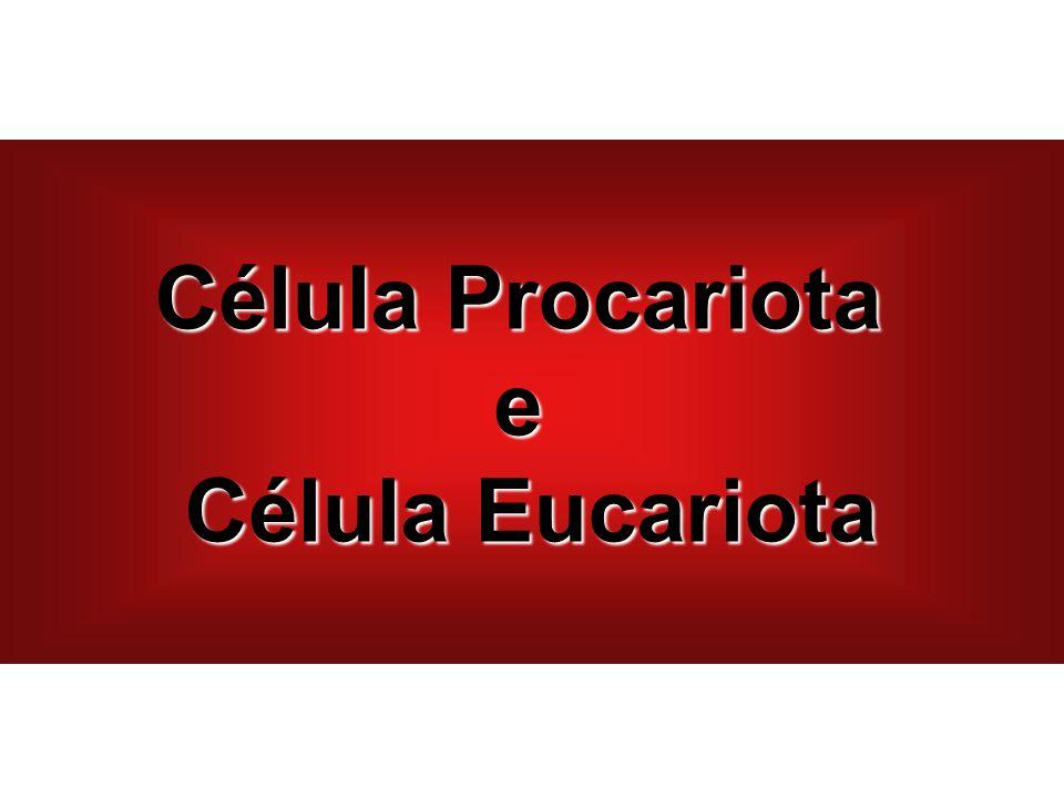 Célula Procariota e Célula Eucariota