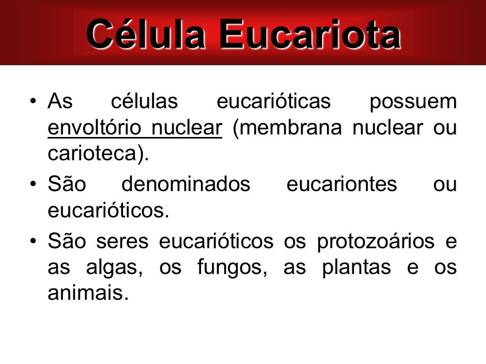 Célula Eucariota As células eucarióticas possuem envoltório nuclear (membrana nuclear ou carioteca).