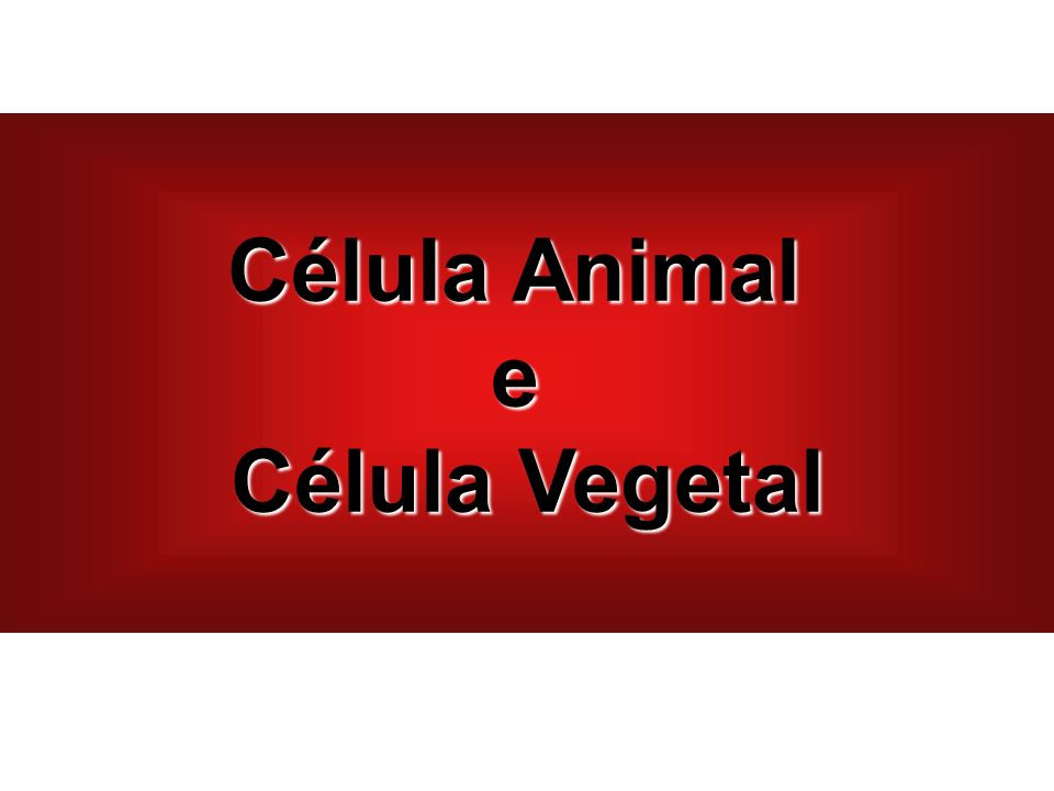 Célula Animal e Célula Vegetal