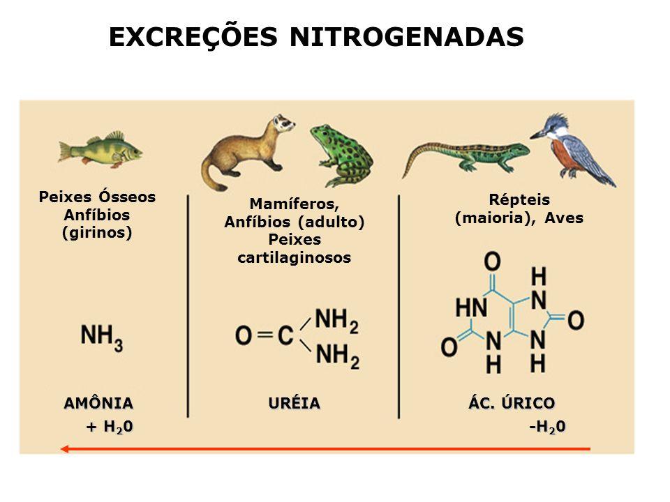 EXCREÇÕES NITROGENADAS