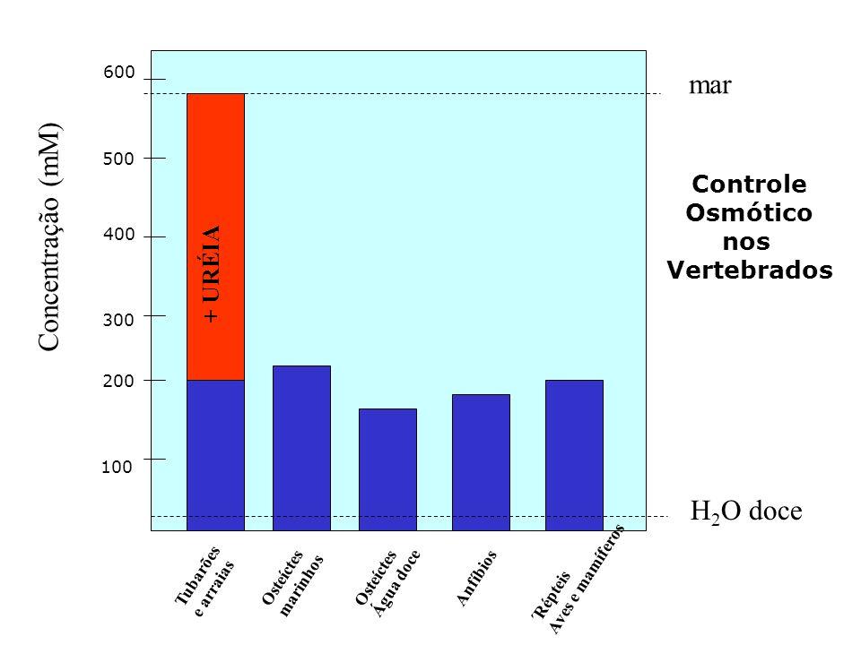 mar Concentração (mM) H2O doce + URÉIA Controle Osmótico nos