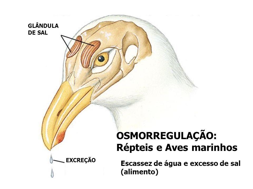 OSMORREGULAÇÃO: Répteis e Aves marinhos