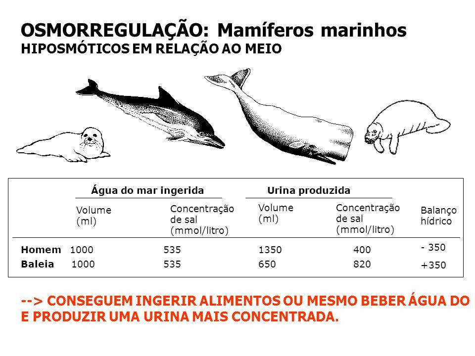 OSMORREGULAÇÃO: Mamíferos marinhos