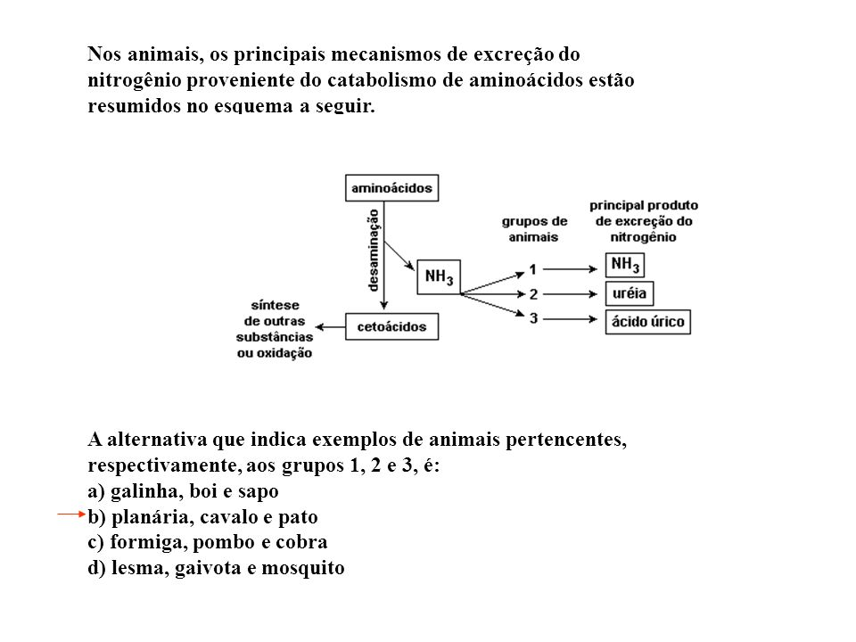 Nos animais, os principais mecanismos de excreção do nitrogênio proveniente do catabolismo de aminoácidos estão resumidos no esquema a seguir.