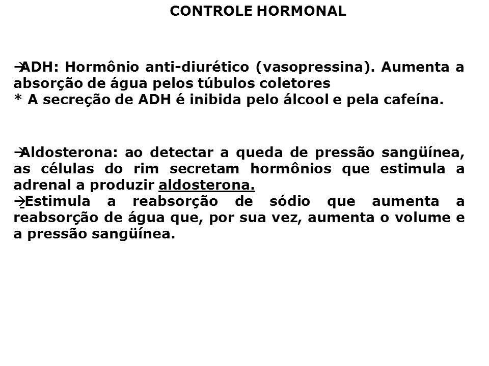 CONTROLE HORMONAL ADH: Hormônio anti-diurético (vasopressina). Aumenta a absorção de água pelos túbulos coletores.