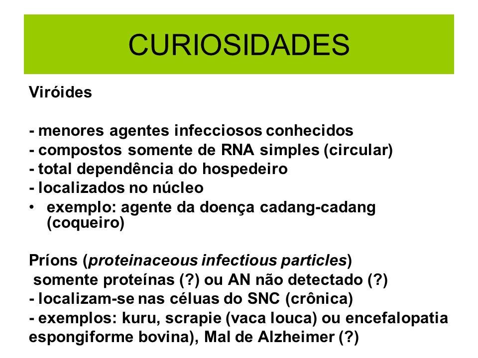 CURIOSIDADES Viróides - menores agentes infecciosos conhecidos