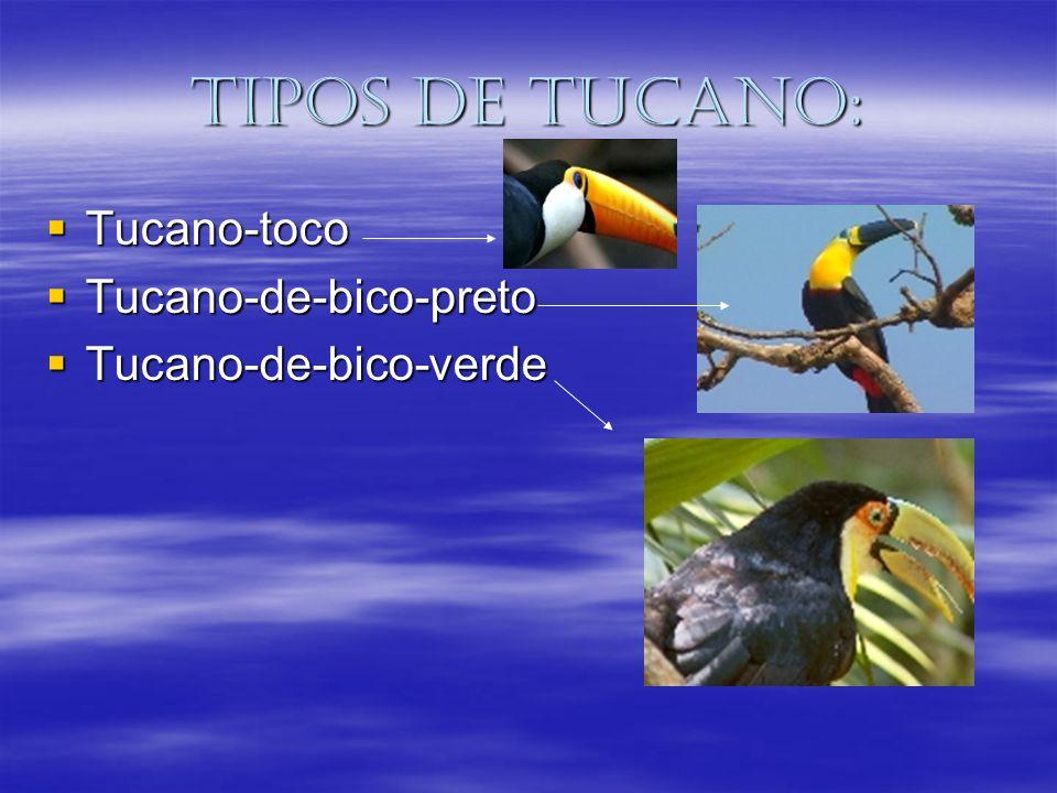 Tipos de tucano: Tucano-toco Tucano-de-bico-preto Tucano-de-bico-verde
