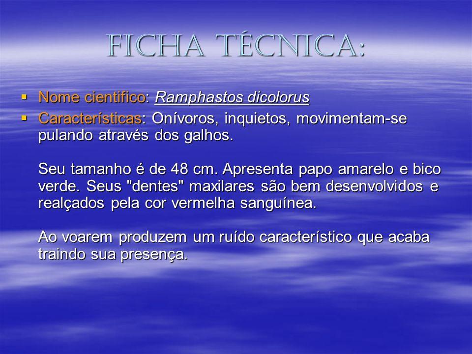 Ficha técnica: Nome cientifico: Ramphastos dicolorus