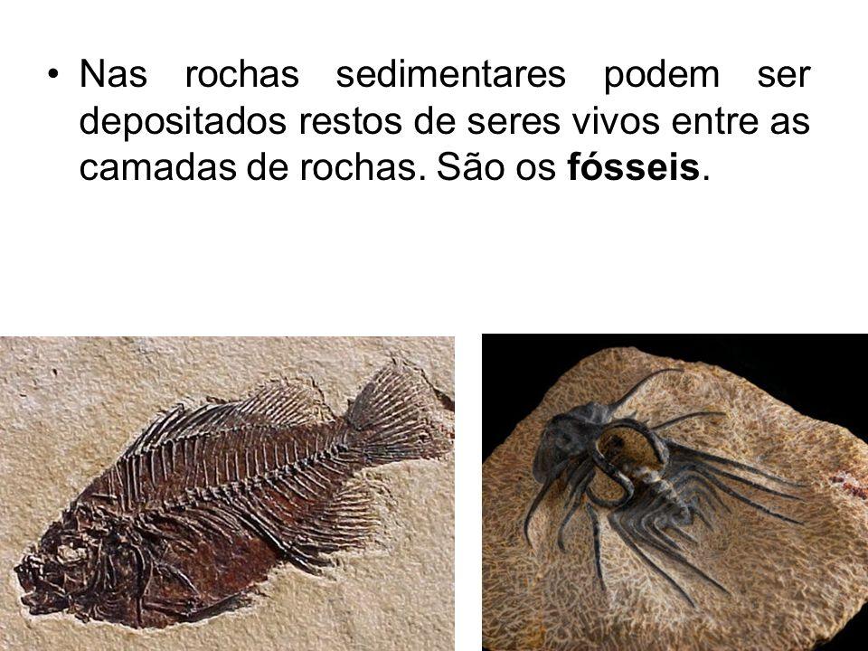 Nas rochas sedimentares podem ser depositados restos de seres vivos entre as camadas de rochas.