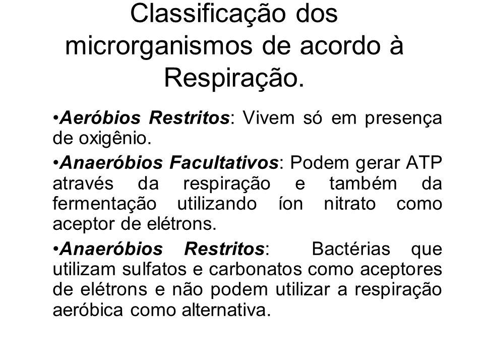 Classificação dos microrganismos de acordo à Respiração.