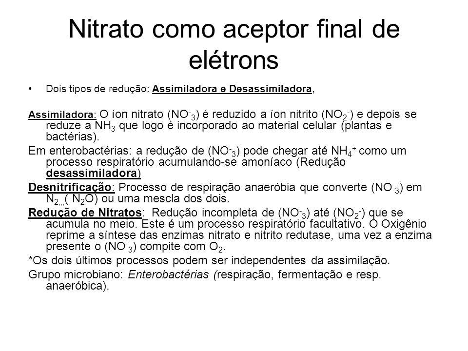 Nitrato como aceptor final de elétrons