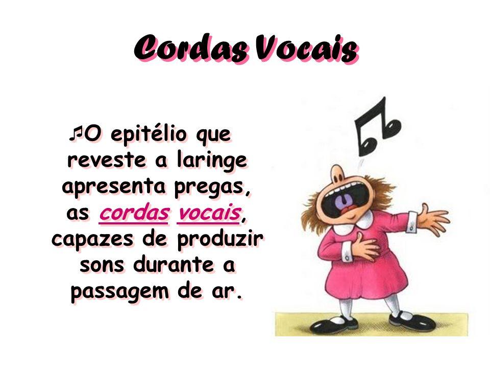 Cordas Vocais O epitélio que reveste a laringe apresenta pregas, as cordas vocais, capazes de produzir sons durante a passagem de ar.