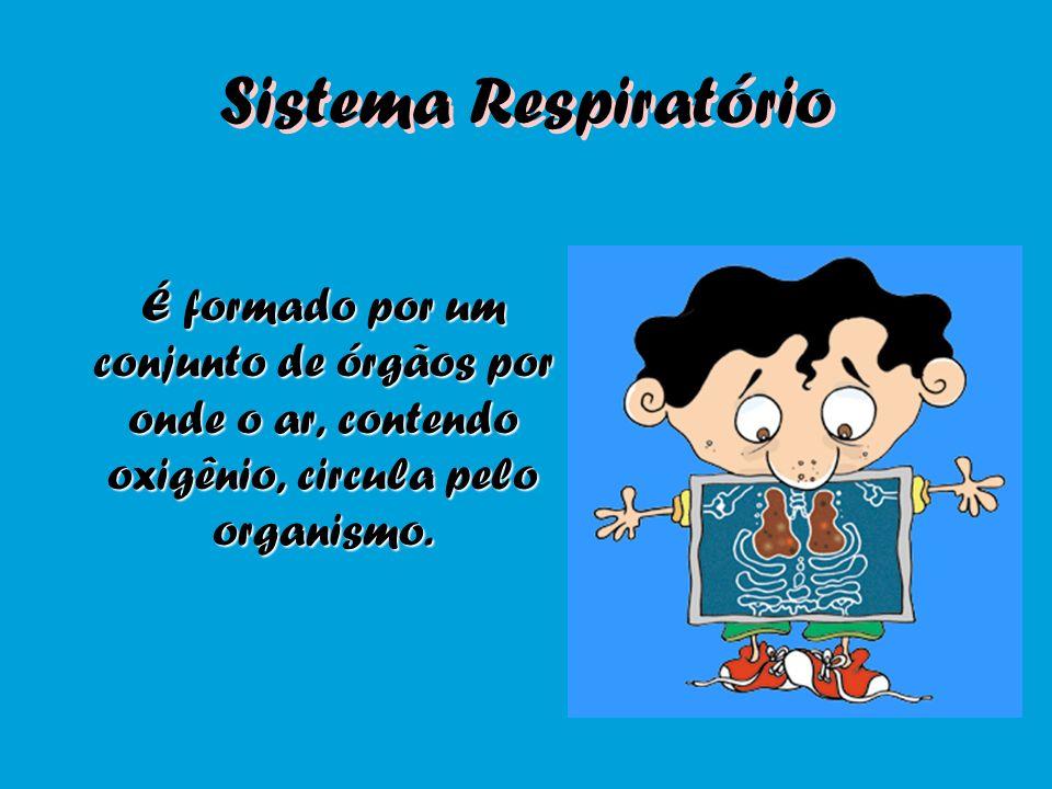 Sistema Respiratório É formado por um conjunto de órgãos por onde o ar, contendo oxigênio, circula pelo organismo.