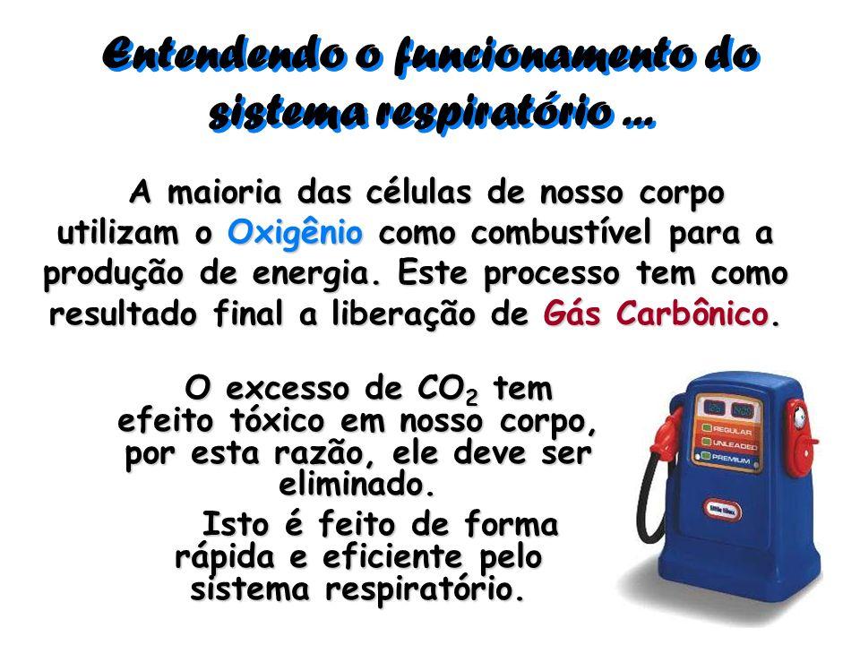 Entendendo o funcionamento do sistema respiratório ...