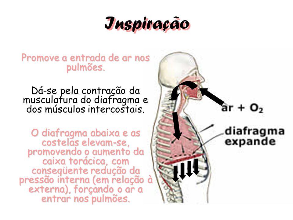 Promove a entrada de ar nos pulmões.