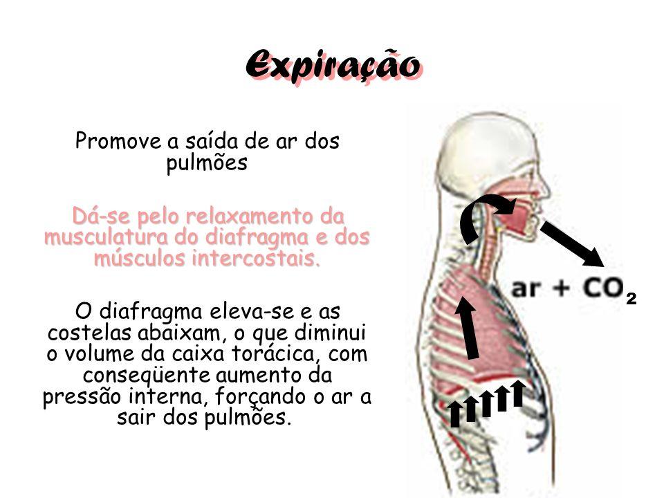 Promove a saída de ar dos pulmões