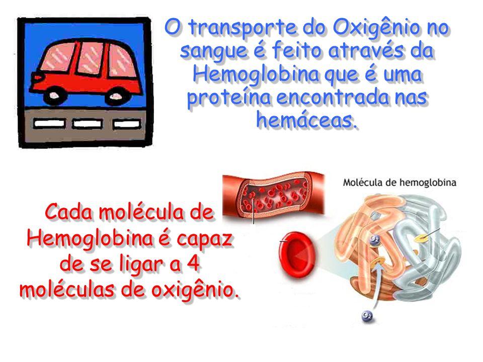 O transporte do Oxigênio no sangue é feito através da Hemoglobina que é uma proteína encontrada nas hemáceas.